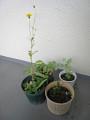 5種類?の植物